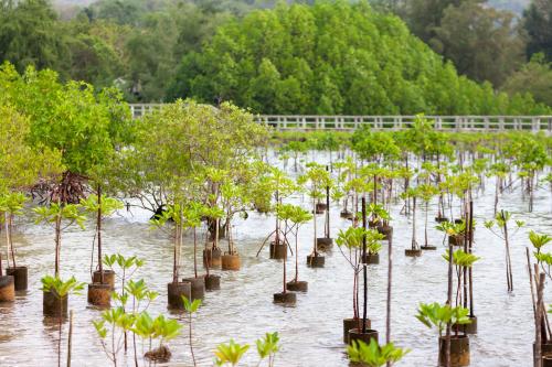 Habitat Restoration:   Locally, Nationally, and Globally 78