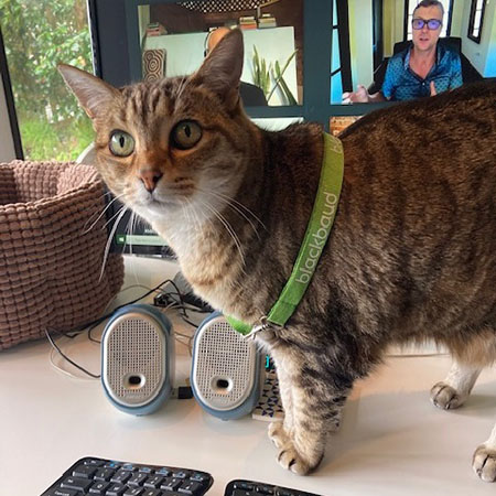 Share: Cats of bbcon