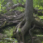 forest-4704358_1920.jpg